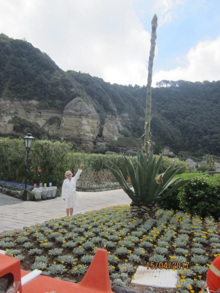 Сады Посейдона. Цветочек