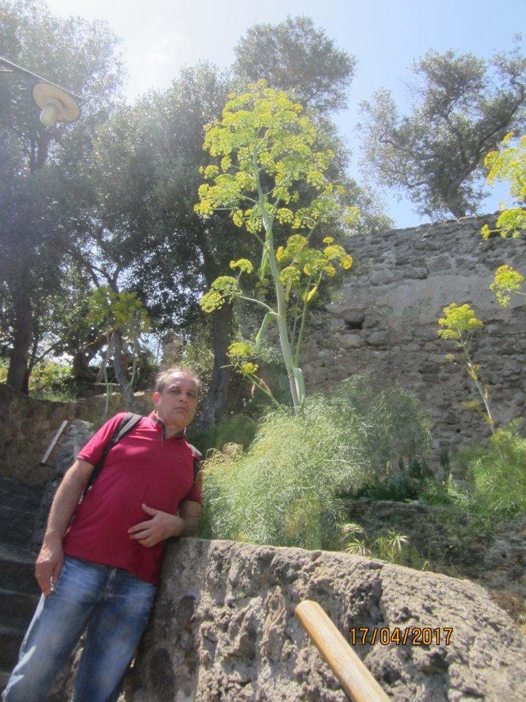 Арагонский замок. Сад.