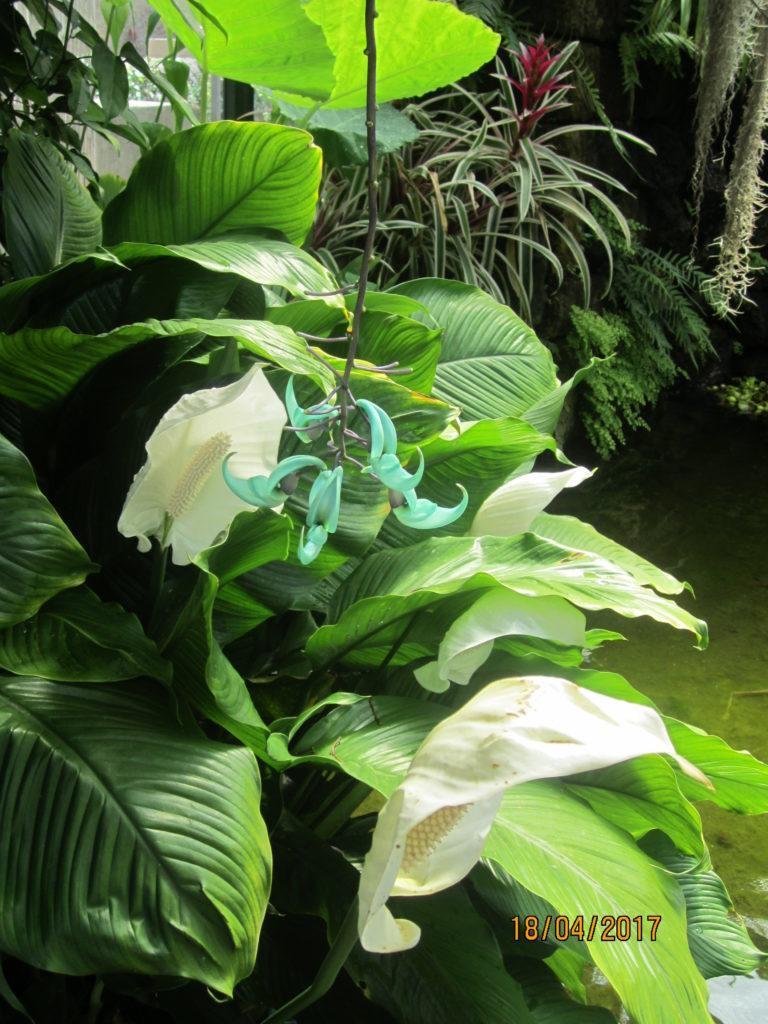 Сад Ла Мортелла. В оранжерее Дом Виктории