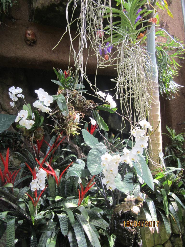 Сад Ла Мортелла.Вилла Уолтонов оранжерея с орхидеями.