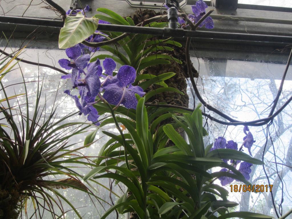 Сад Ла Мортелла.Вилла Уолтонов. Оранжерея с орхидеями.