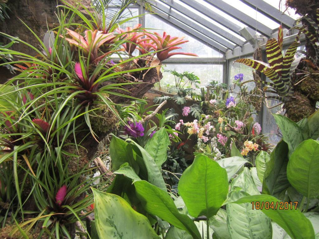 Сад Ла Мортелла. Оранжерея с орхидеями.