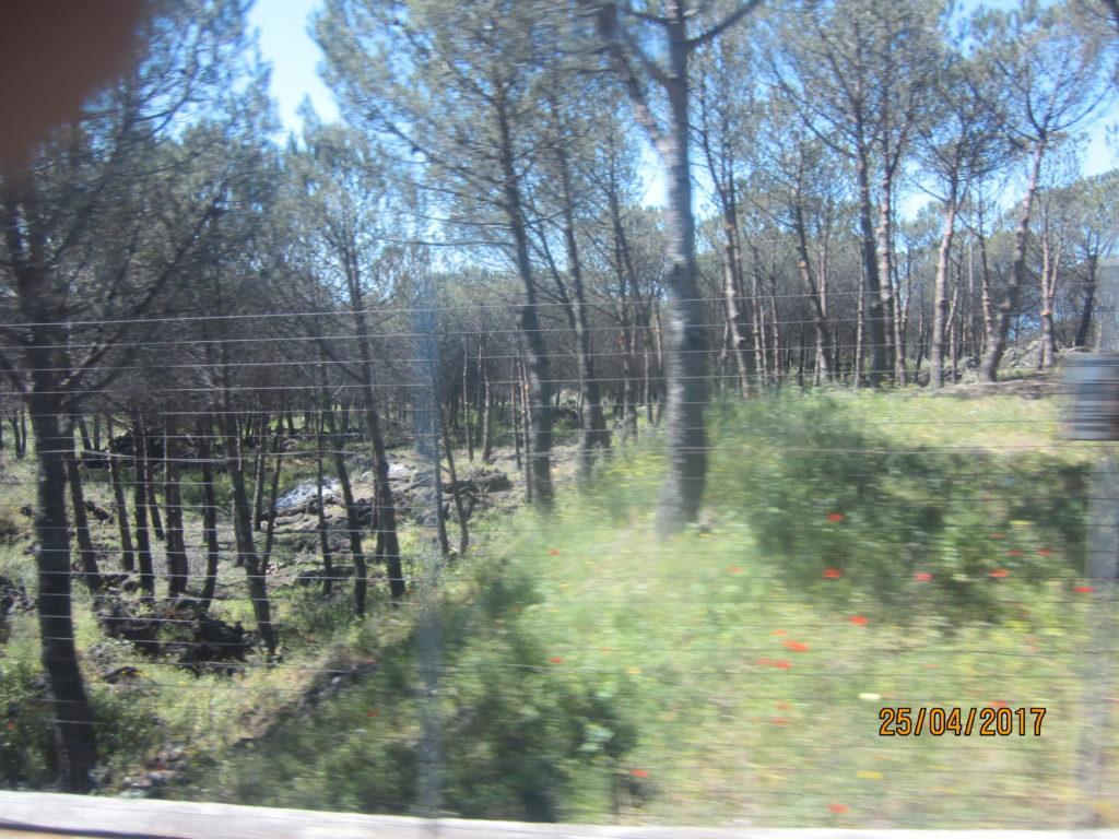 По дороге на вулкан Везувий.