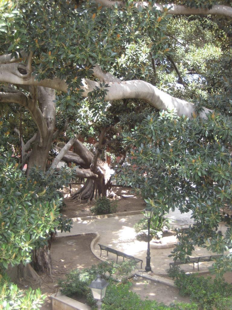 Сиракузы. Парк возе фонтана Аретузы (Fontane Aretusa).