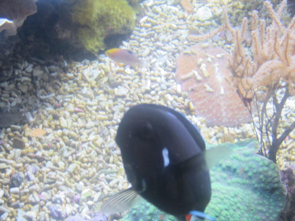 Aquarium of Genoa. Обитатели аквариума.