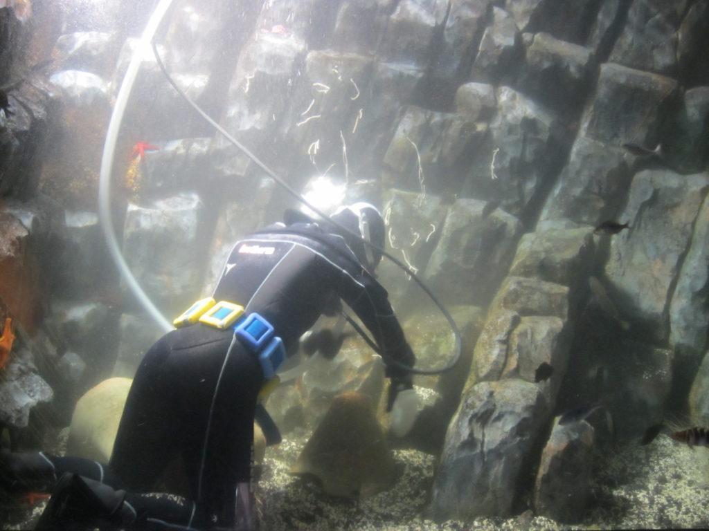 Генуя. Чистка одного из аквариумов.