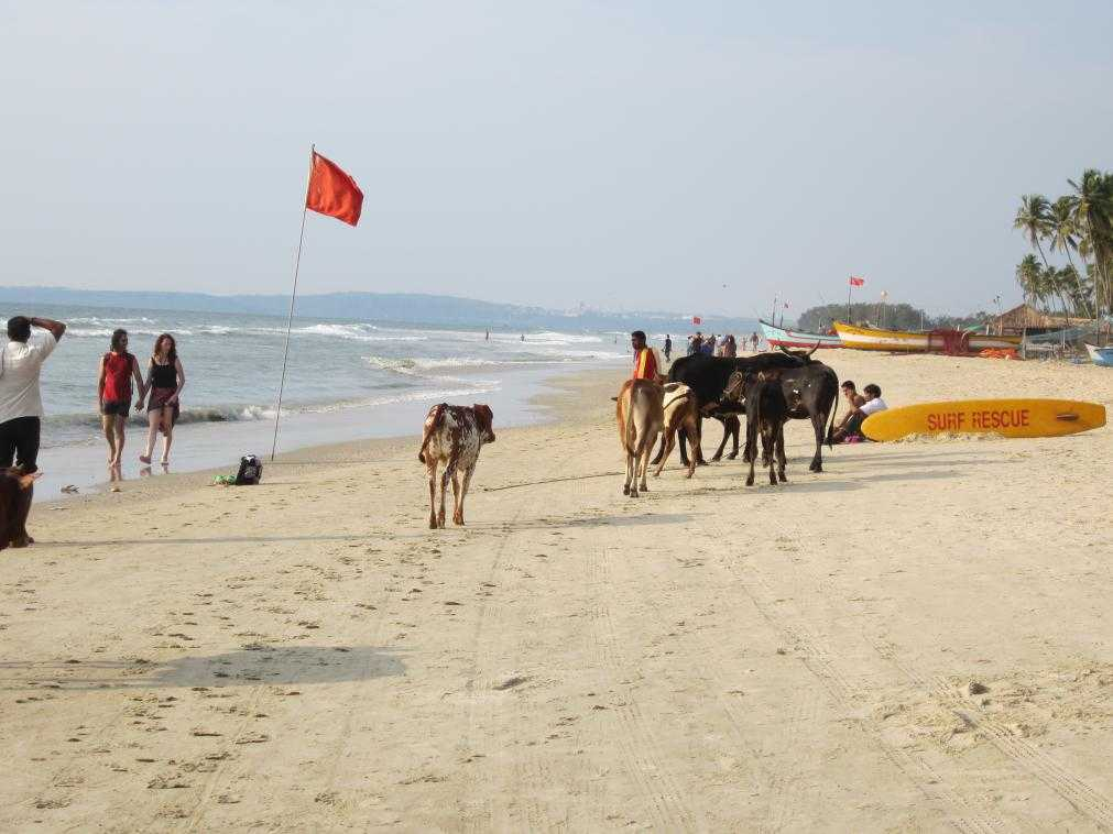 Отдых в Индии. Гоа
