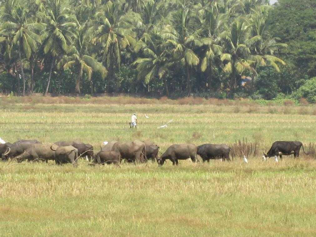 Индия, Южный Гоа